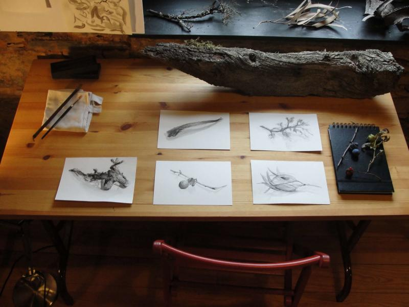 5 days of drawing in nature