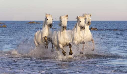 White Horses of the Camargue photo workshop