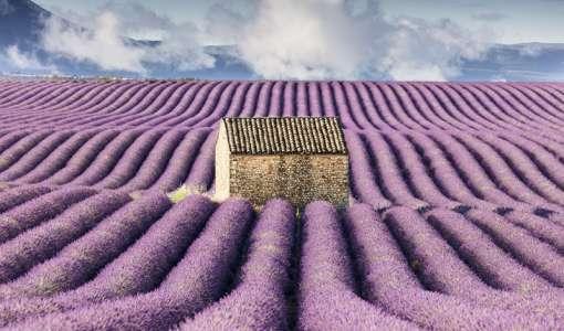 Provence Lavender Photo Workshop