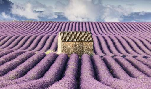 Provence Lavender & Villages Photo Workshop