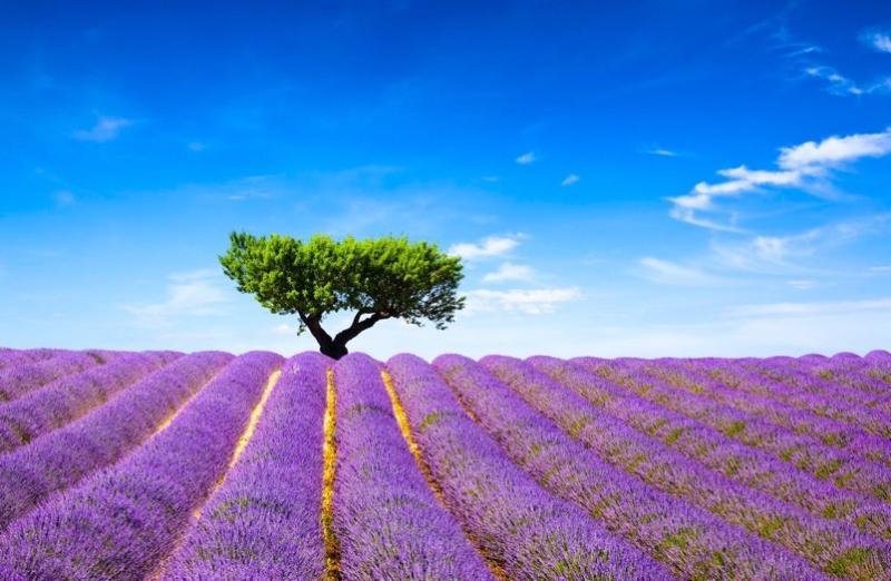 Provence & Cote D'Azur Photo Adventure