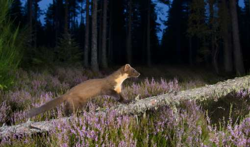 Camera Trap Photography Workshop