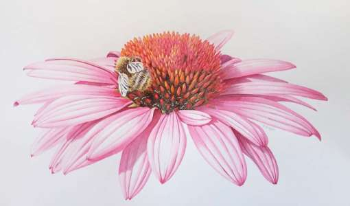 Botanical Painting in Birds, Butterflies & Bugs
