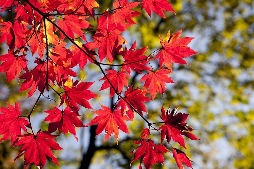Plants and leaves Pixabay.jpg
