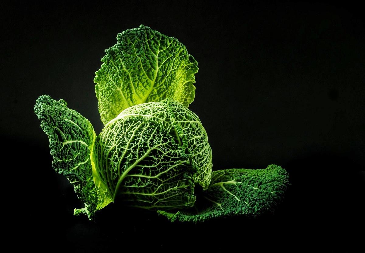 Cabbage Leaf Pixabay.jpg