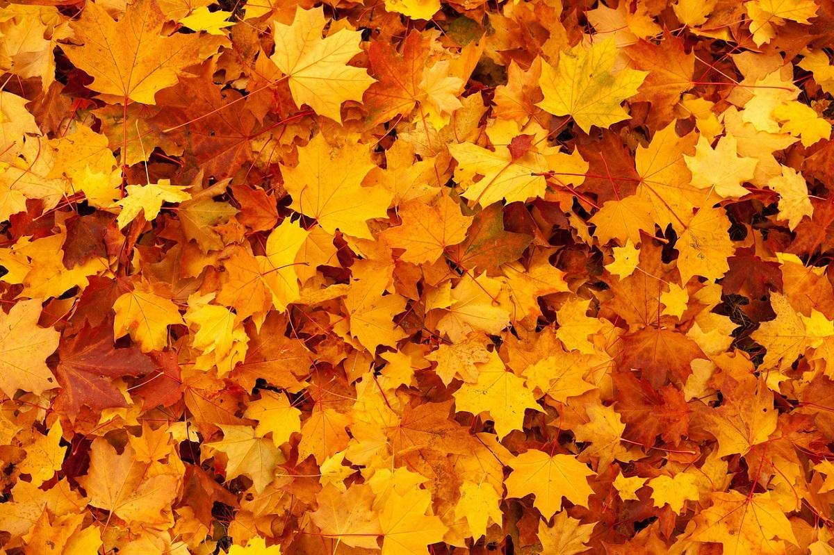 Painting fallen leaves Pixabay.jpg